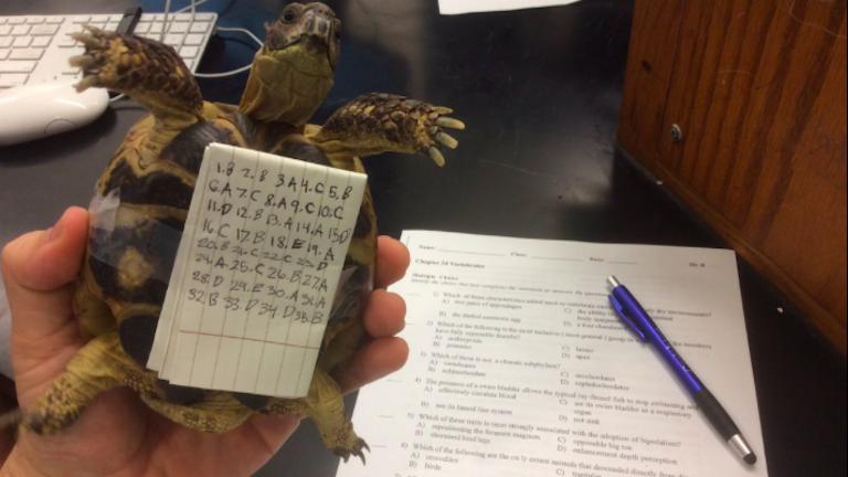 Puskázás mesterfokon: teknőse hasáról leste le a válaszokat egy srác