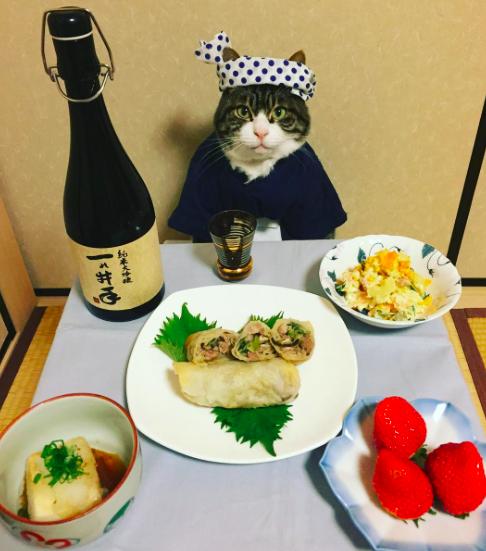 Japán macska lakomáit imádják a neten