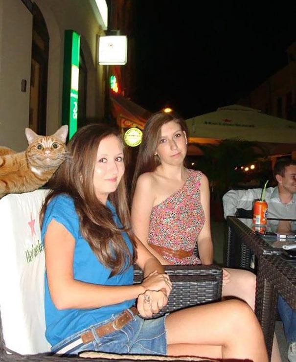 10 alkalom, amikor a macskák tönkretették a tökéletes képeket