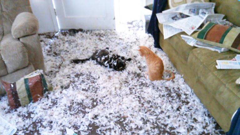 10 állat, aki nagyon nagy káoszt csinált, amíg egyedül volt otthon