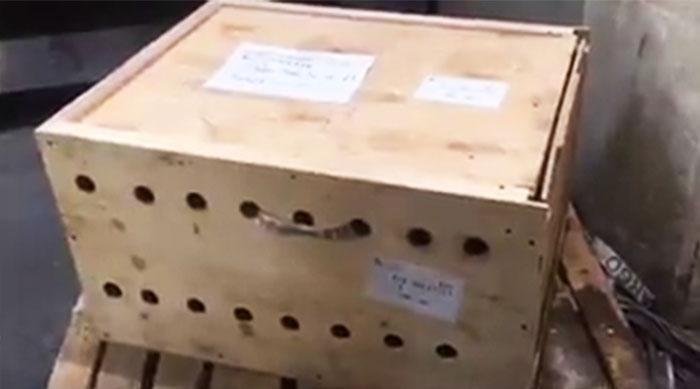 Egy hétig érintetlenül állt a doboz, amiben tigriskölykök gubbasztottak