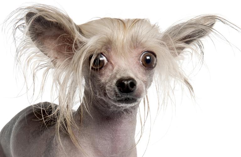 Hamis kutyákat árulnak a neten