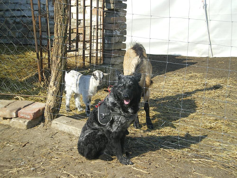 Kutyusuk és örökbefogadó gazdáik: