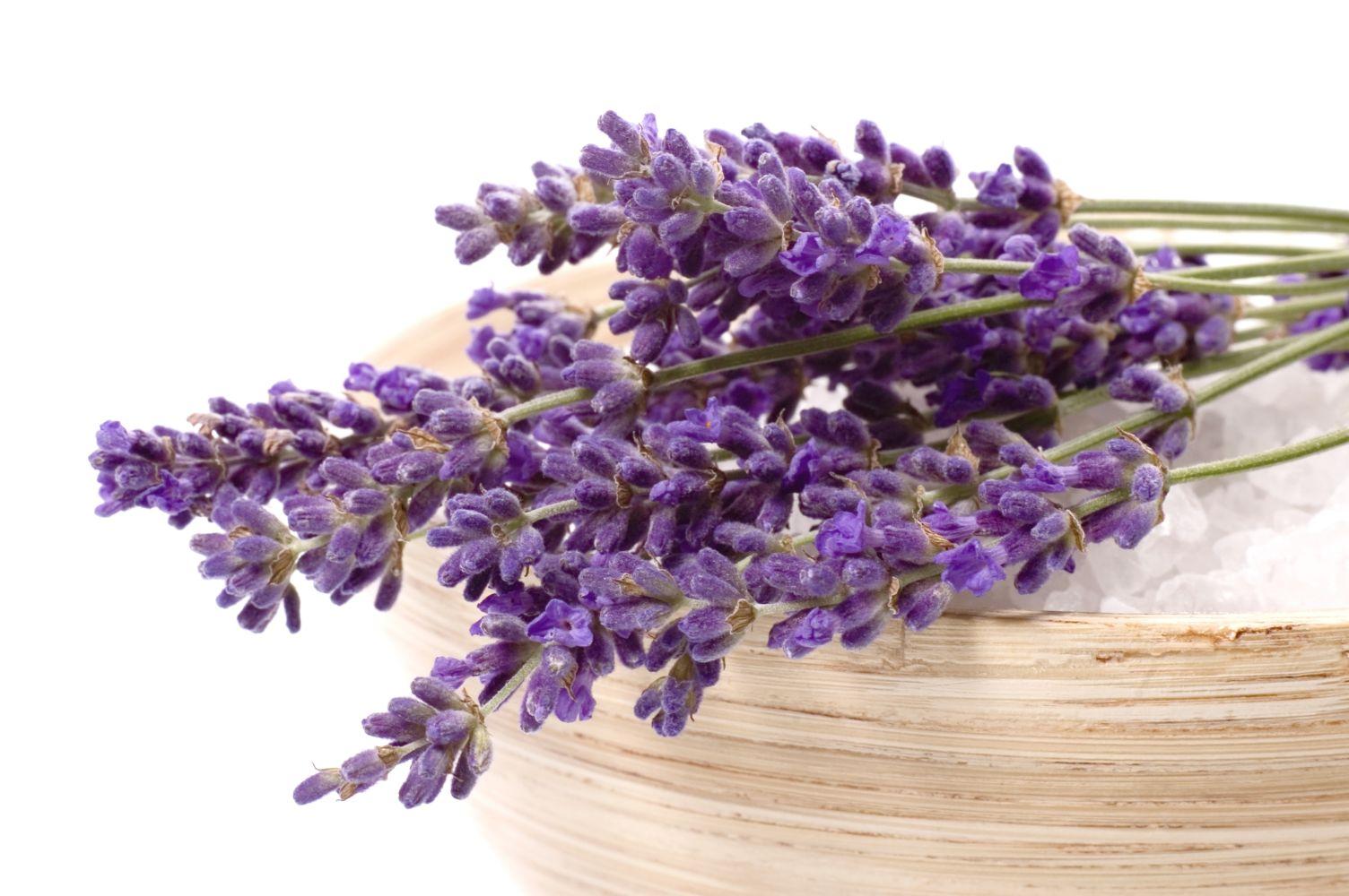Sáfrány, levendula, körömvirág – így szedik őket