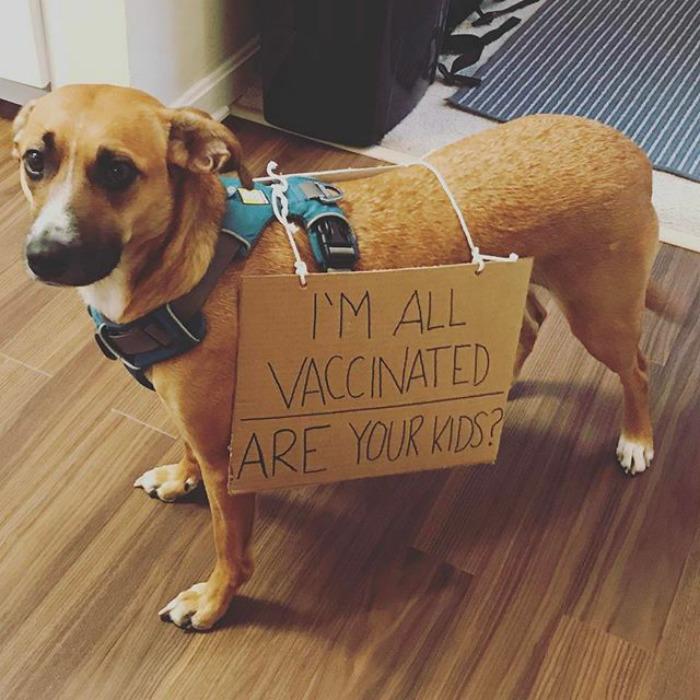 10 nagyon okos kutya, aki tüntetett a tudományért
