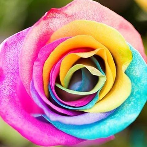 Az unikornisos rózsacsokor a legvarázslatosabb dolog, amit ma láthatsz