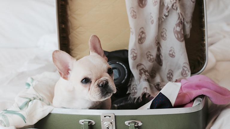 Ezt kell tudnod, ha repülőútra vinnéd a kutyádat