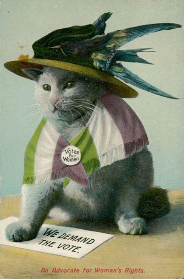 Így imádjuk a macskákat a divatban