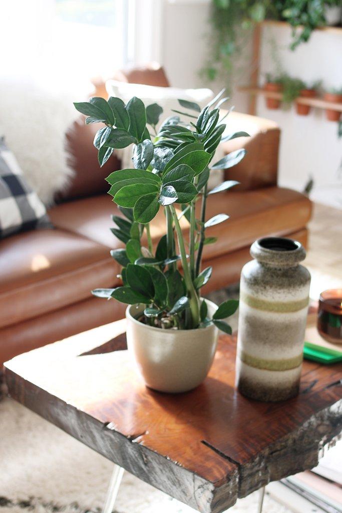 7 trendingelő szobanövény, amivel most nem lőhetsz mellé