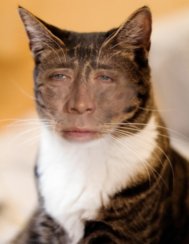 Cukik, puhák és szőrösek: a Nicolas Cage arcú cicáknak te sem tudsz ellenálni