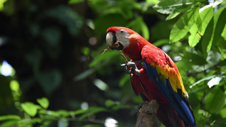 Álomállás a láthatáron: papagájnagykövetet keresnek Costa Ricán