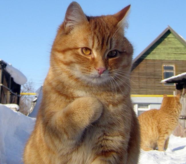 10 macska, akit pont a legjobb pillanatban kaptak le