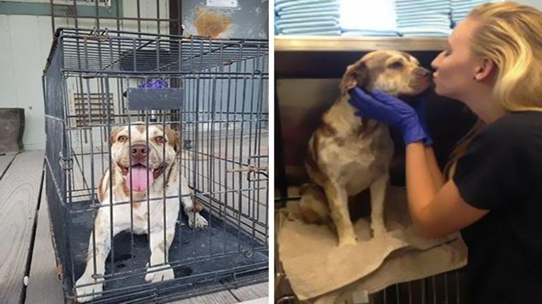 Vízvezeték szerelők mentették meg a sorsára hagyott kutyát