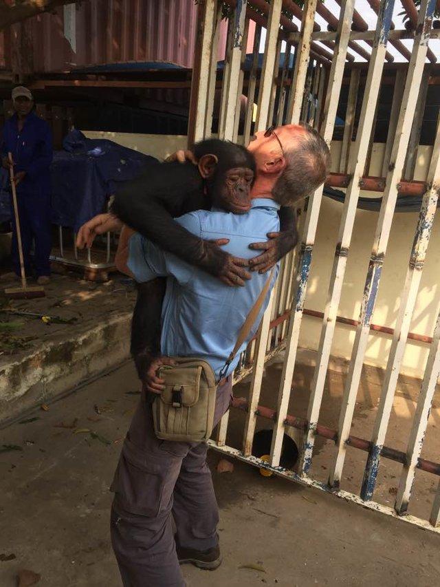 Megható fotó: megölelte megmentőjét a megkínzott csimpánz