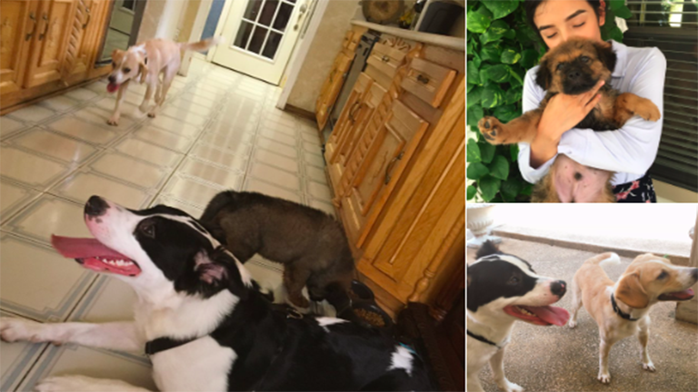 Minden évben újabb kutyával ünnepli házassági évfordulóját a pár