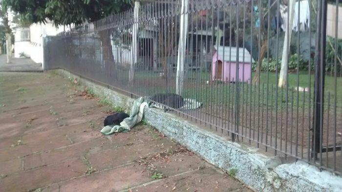 Megható: nem fogod elhinni, miért vitt pokrócot a kertbe ez a kutya
