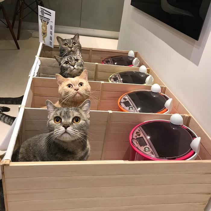 Zseniális módszerrel regulázták meg a mindent felfaló kövér macskát