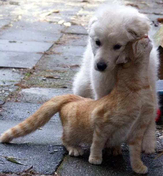 A macskák és a kutyák igenis szeretik egymást