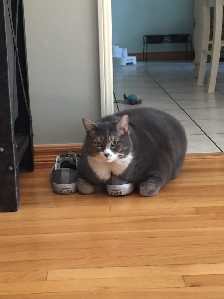 10 nagyon kövér, de azért nagyon cuki macska