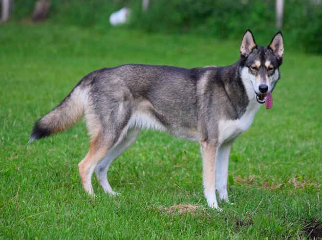 10 cuki kutya, aki egyszerűen nem tud mit kezdeni a nyelvével