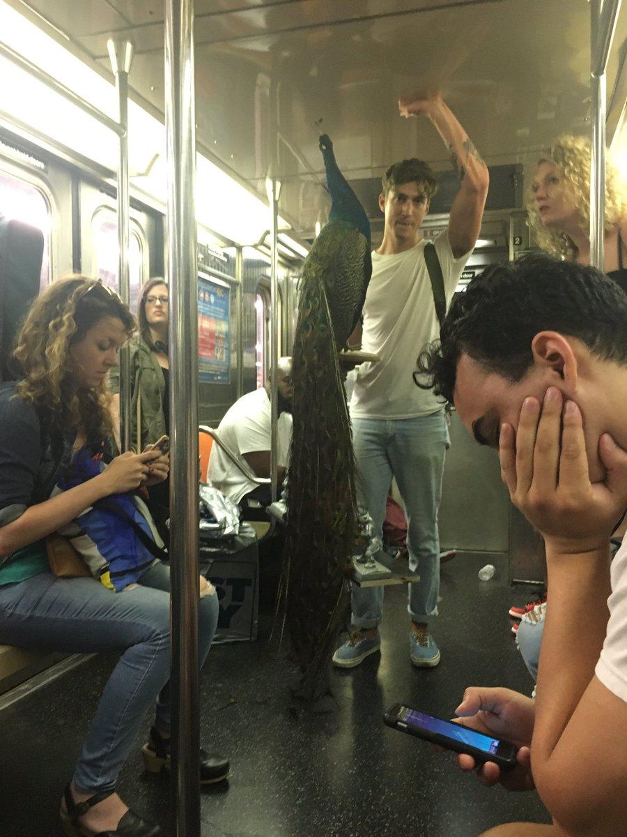 Senkit nem izgatott különösebben a pávával metrózó srác