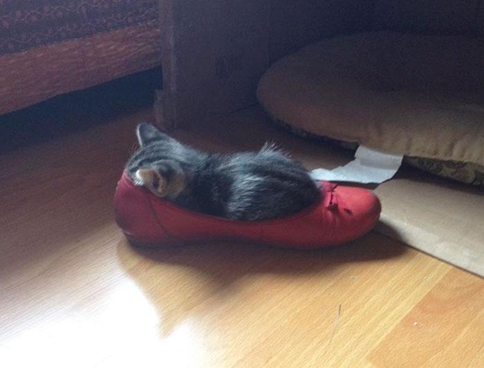 15 kép, ami bebizonyítja, hogy egy macska minden rendelkezésre álló helyet kitölt