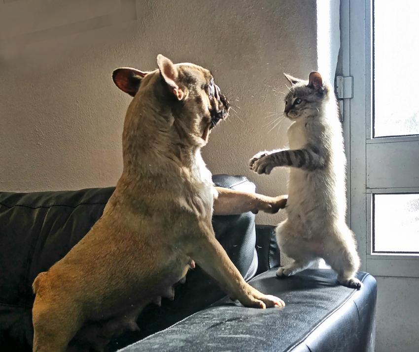Ezek a legviccesebb állatos fotók az idei Comedy Pet Photography Awards-ról