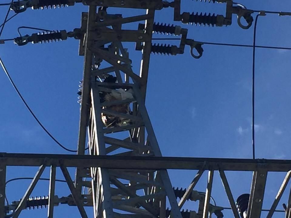 Kis gólyákat ütött agyon az áram, feljelentik az áramszolgáltatót