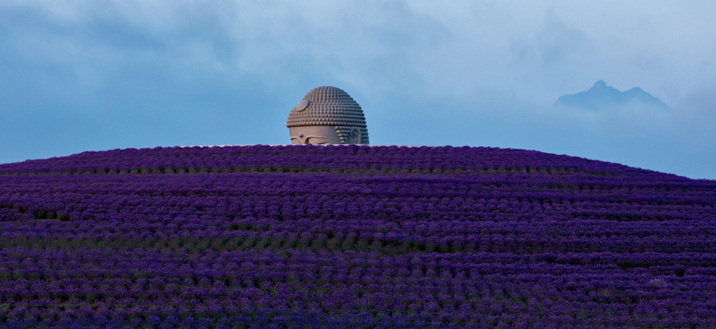 Hatalmas Buddha-szobrot épített a levendulamező közepére a japán sztárépítész