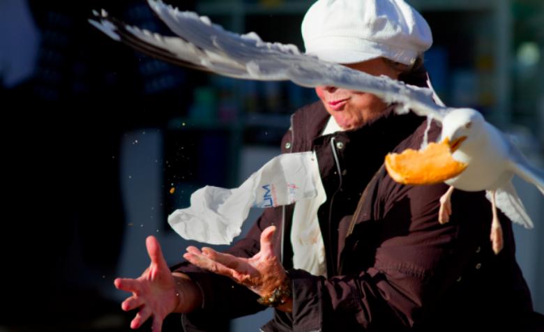 Egy tipikus jelenet: az ügyesebb madarak csak a halat, rákot, kagylót vagy a tintahalat kapják ki a szendvicsből