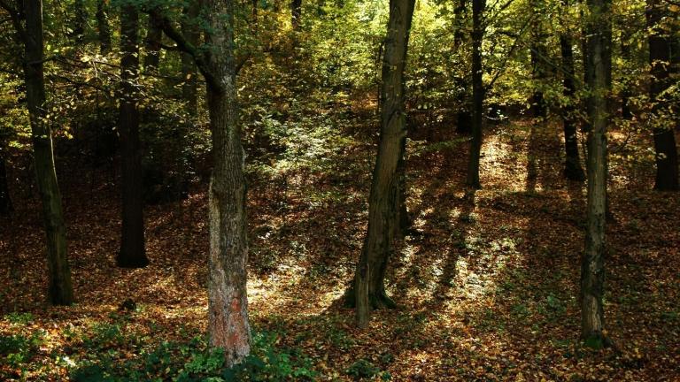 Erdő a Karancs-hegységben, Salgótarjántól nem messze (fotó: MTVA)