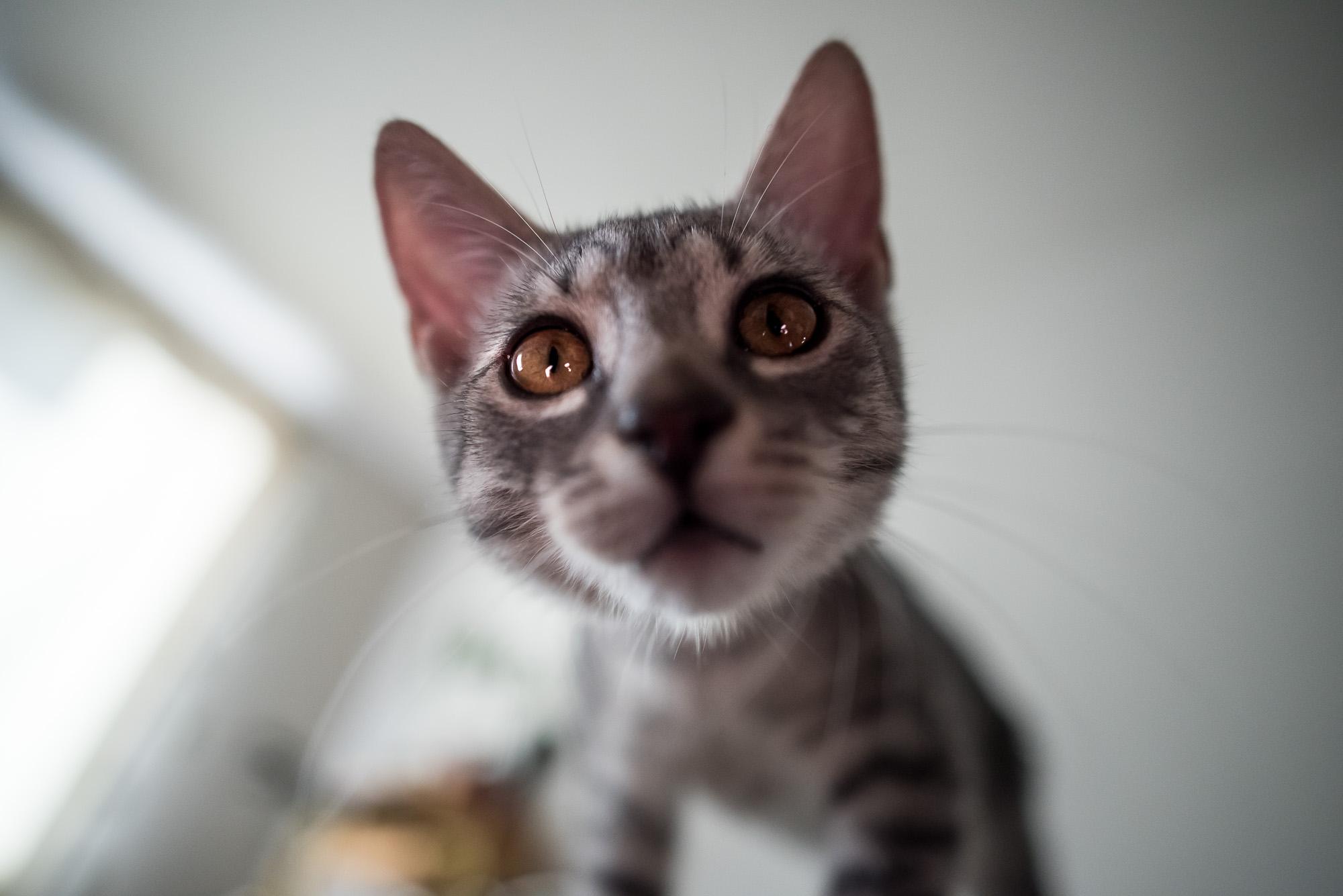 Mióta macskám van, gyógyulok, pedig azt sem tudtam, hogy beteg voltam