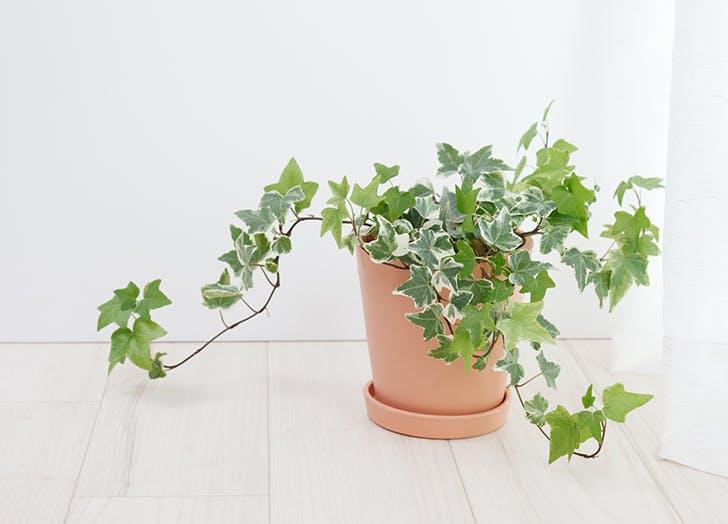 5 szobanövény, ami a hangulatodnak is jót tesz