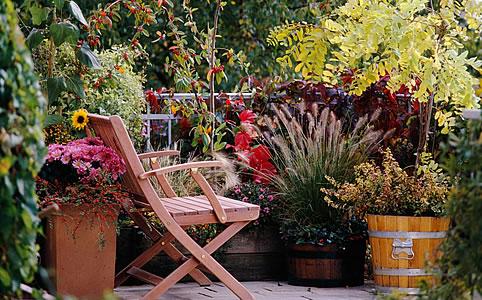 Tippek dézsás növényekhez