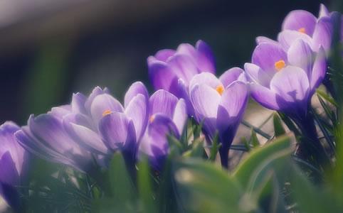 Tavaszi virágnéző túra Beregben