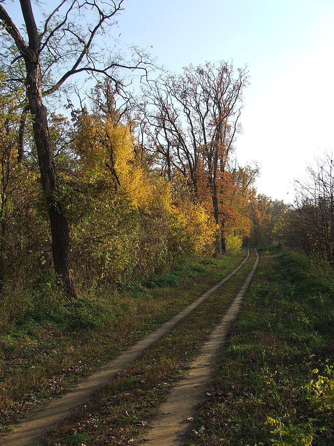 A sóstói erdő Fotó: