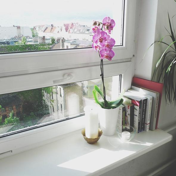 Az orchidea szereti a fényt (Getty Images)