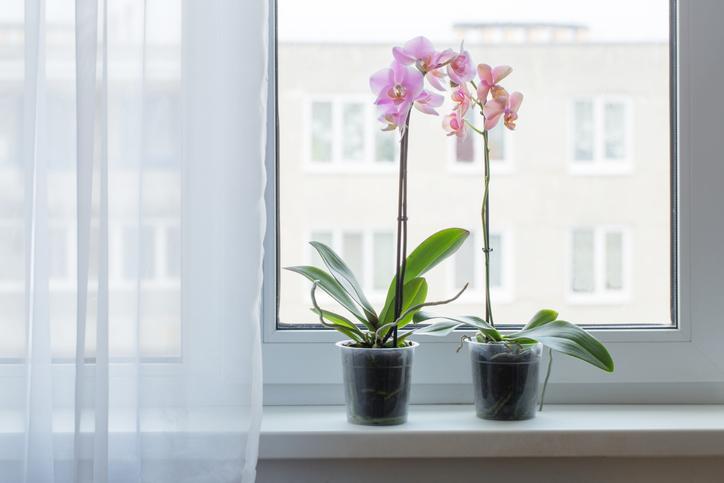 Átlátszó műanyag cserépbe ültesd az orchideát (Getty Images)