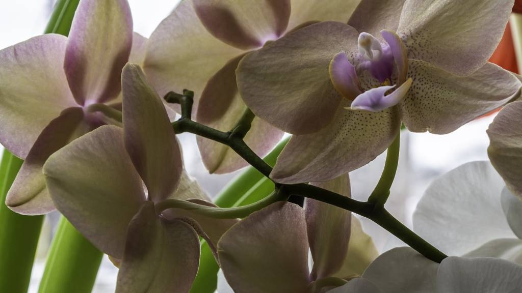 Orchidea gondozási tippek