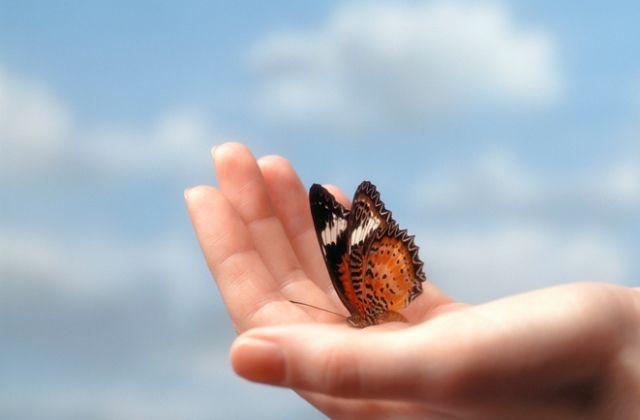 pillangó angyal üzenet univerzum