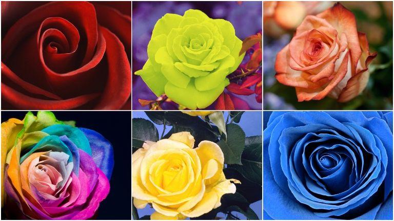 személyiségteszt rózsák önismeret