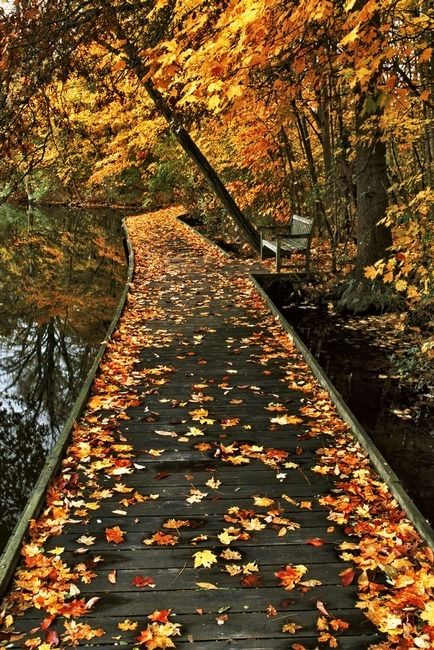 szép őszi idézetek 10 gyönyörű idézet az őszről | nlc