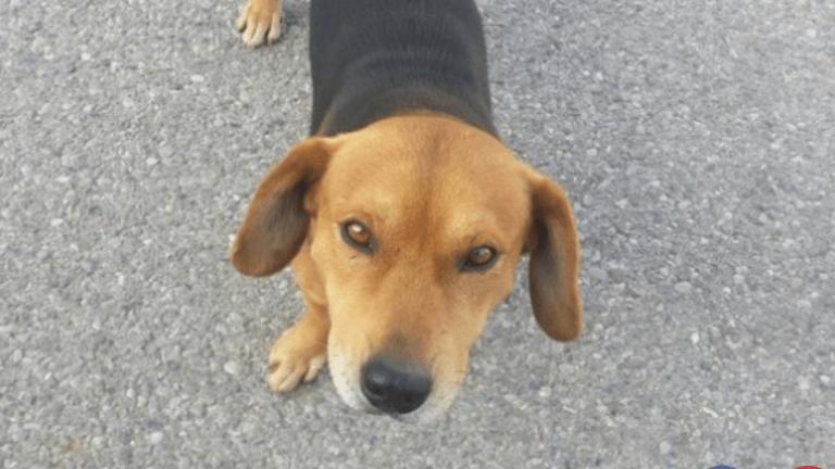 kutya, életmentés