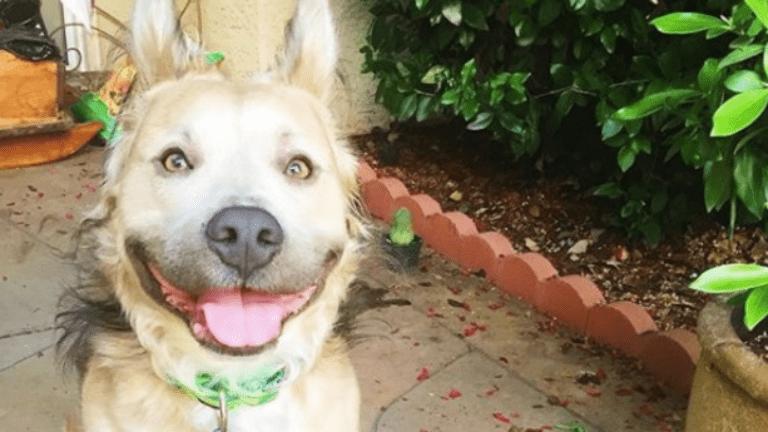 kutya, örökbefogadás