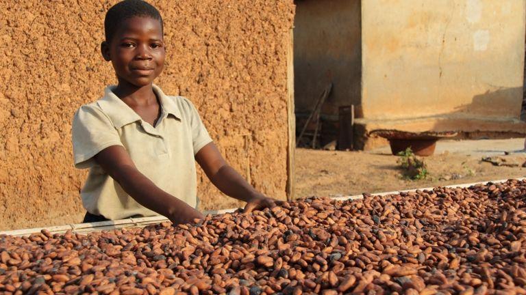 Kakófarm Nyugat-Afrikában (fotó: Jürgen Bätz/dpa)