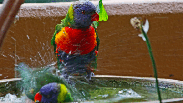 hőség, papagáj