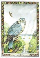 kelta tarot kártya horoszkóp skorpió
