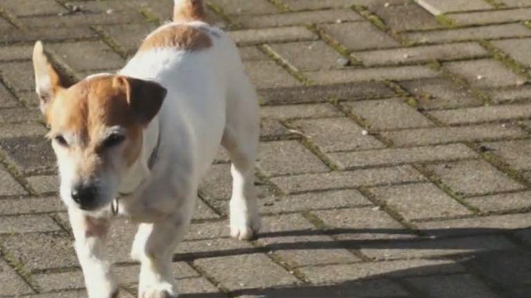 kutya, eddie (forrás: TV2)