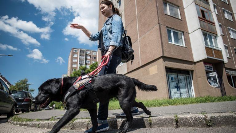 vakvezető kutya (fotó: Neményi Márton)