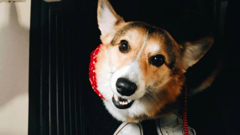 terápiás kutya repülő gyász